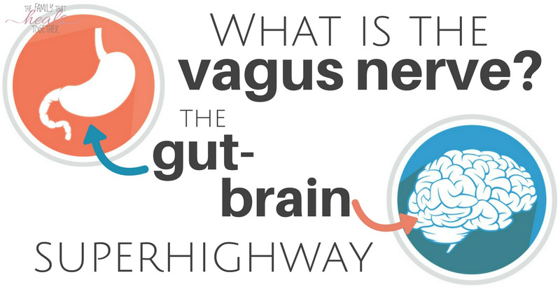 what is the vagus nerve the gut brain superhighway