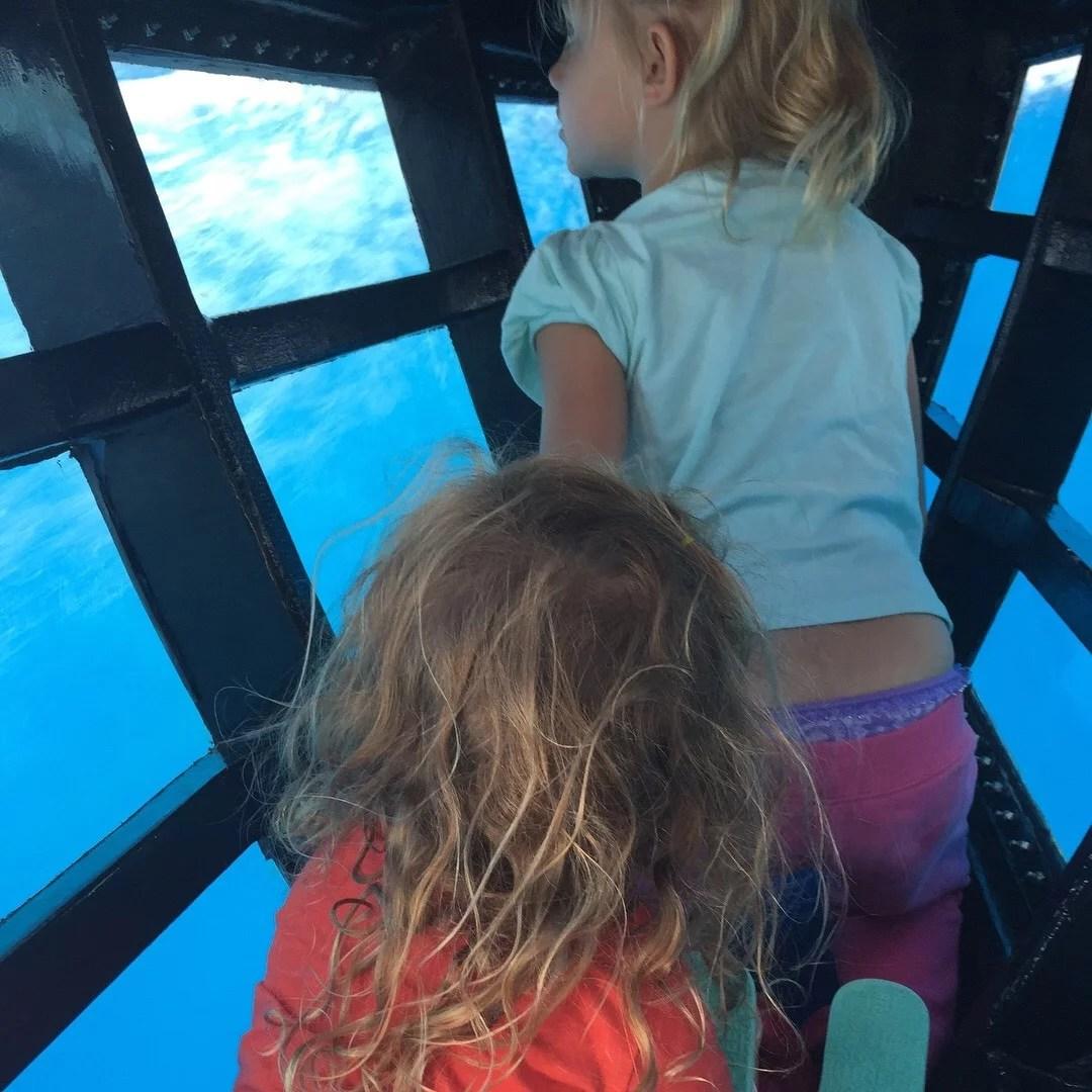 Capt Dave's Whale Safari