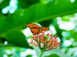 boquete panama butterfly garden