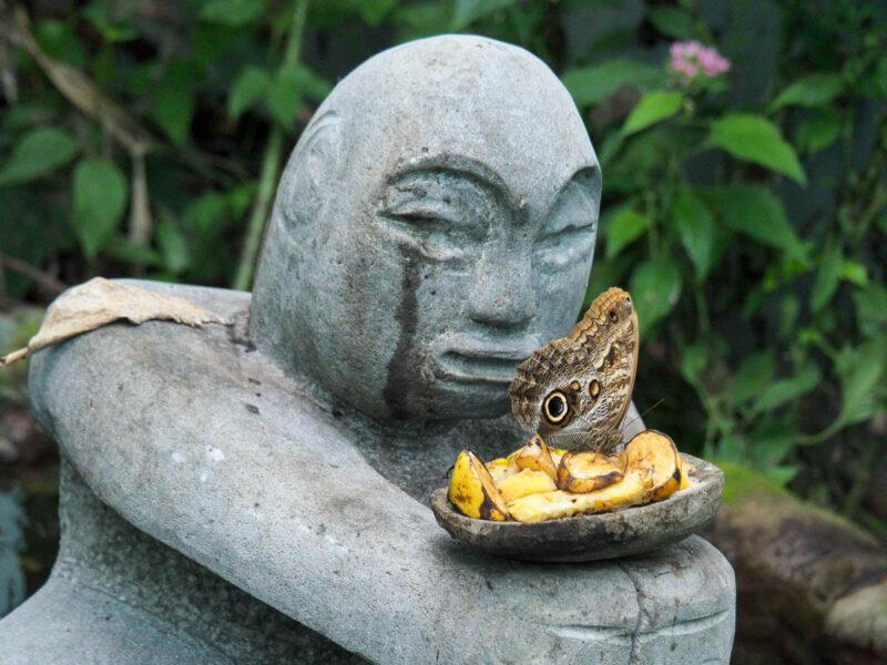 boquete butterflies
