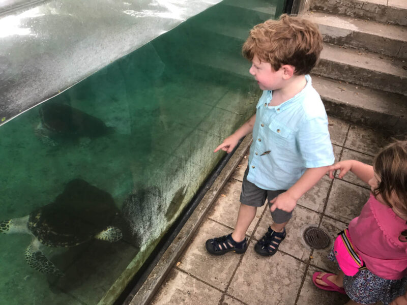 Smithsonian - family activities in Panama City