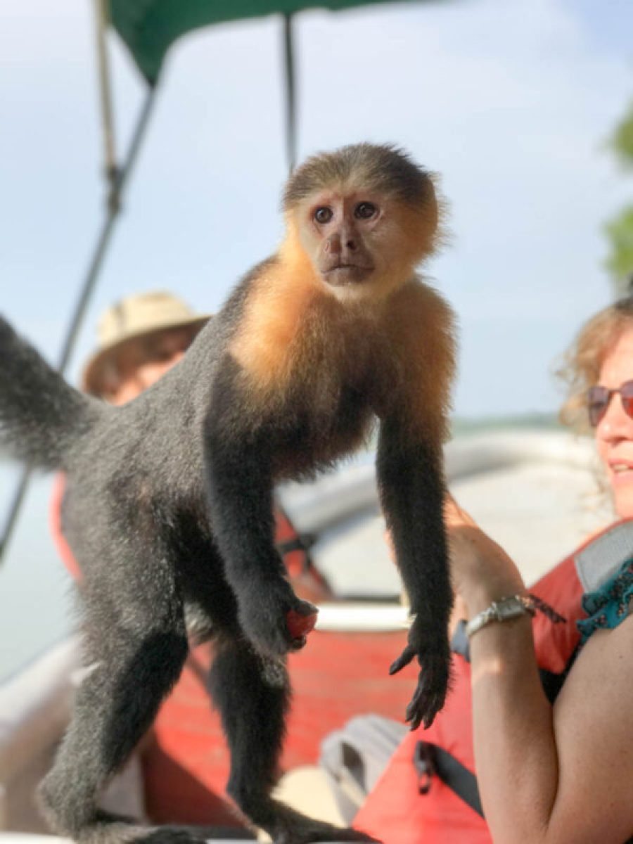 Panama Day Trips Monkey Island
