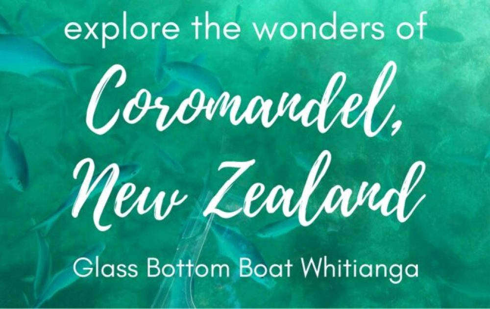 Glass Bottom Boat Whitianga: Exploring the beauty of the Coromandel Peninsula, New Zealand
