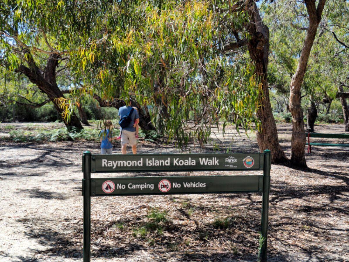 Raymond Island koala trail
