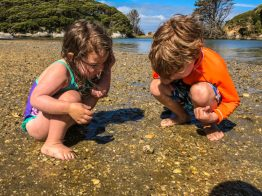 things to do in nelson nz-5