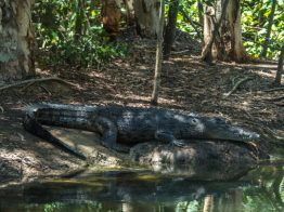 crocodile tour cairns