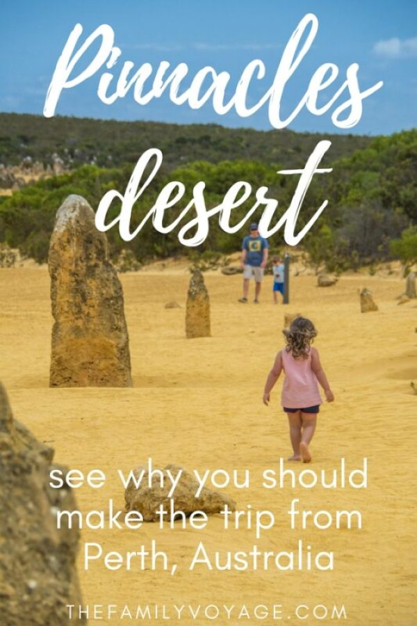 When you're looking for the best things to do in Perth, make sure you plan a day trip from Perth to the Pinnacles desert. This unique landscape is truly otherworldly! Travel Western Australia takes away the hassles and will show you the coolest spots - from Australian wildlife like kangaroos and koalas to sandboarding in Lancelin on the sand dunes. It's truly a can's-miss activity in Western Australia. #travel #Australia #WesternAustralia #Perth #daytrips #Pinnacles #adventure #wildlife