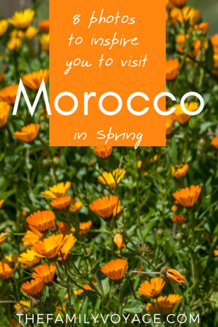 If you're considering visiting Morocco, don't book your flights until you SEE THESE PHOTOS! We promise, you'll be convinced to make the trip for spring break next year. #Africa #Morocco #Marrakech #Fes #Essaouira #Volubilis