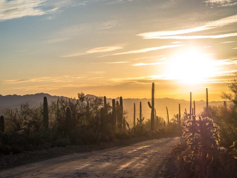 Golden hour at Saguaro National Park, Tucson Arizona