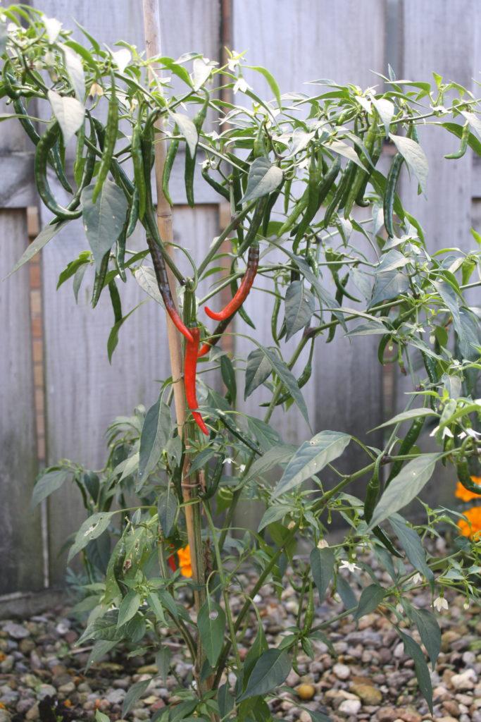 Sweet Chilli Sauce | The Fare Sage