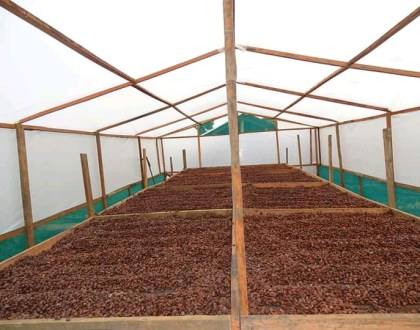 Why You Need Solar Dryers After Harvesting Crops
