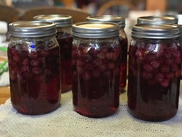 Canned wild grapes