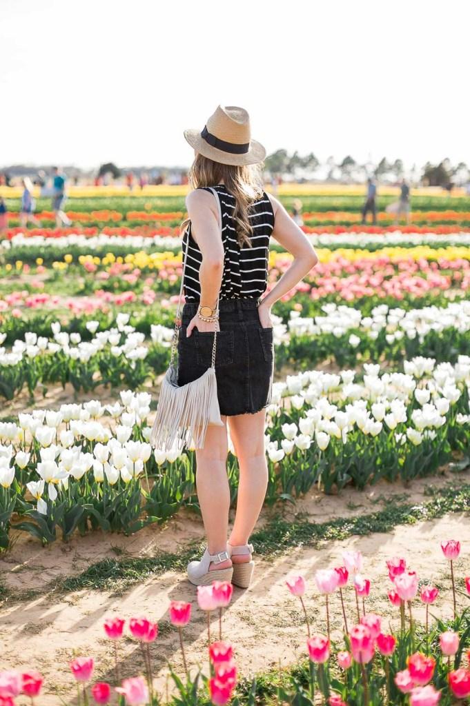 Texas-Tulips-4148