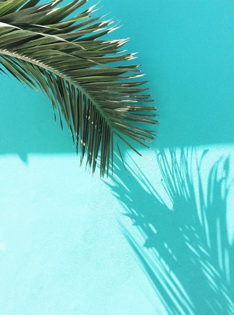 aqua wall with palm leaf