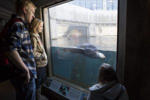 AP Biology and Zoology classes will travel to the Monterey Bay Aquarium