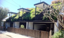 Green rooftops give a backyard feel to smaller housing units in Sydney.