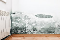 Mould finally hit the federal government radar