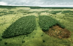 advertisement by WWF
