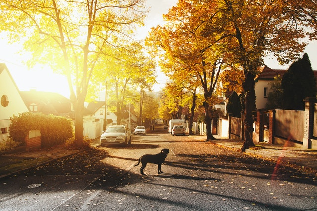I'm Moving: How Much is My House Worth - get that dog off the road! - image