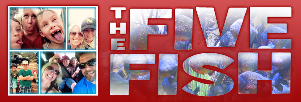 the five fish, i googled mom, karie herring, five fish blog