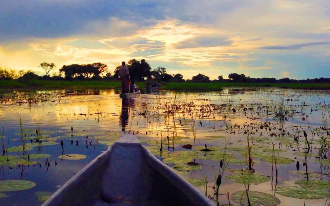 Discovering the Delta: Okavango Bush Camping