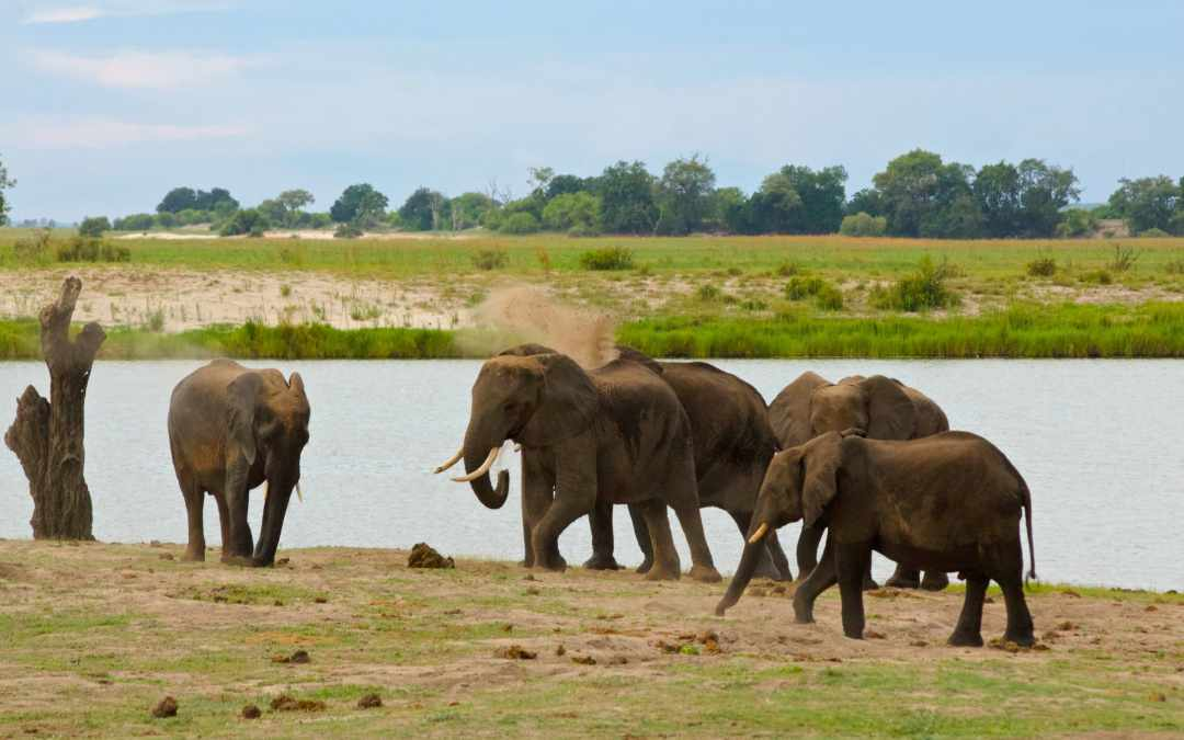 Game Drive: Chobe National Park