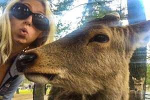 5 Things To Do In Nara, Japan