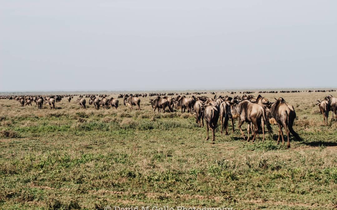 Sizing up the Serengeti – Day 1