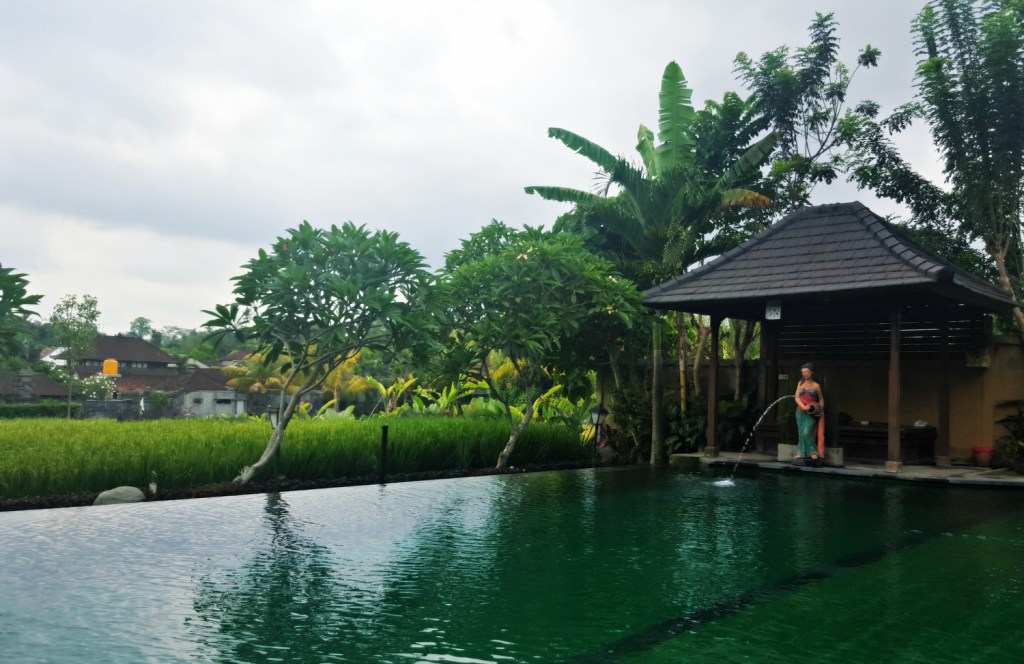 bliss-ubud-infinity-pool-swimming=paddy-field-bali-indonesia