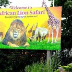 Go Wild at African Lion Safari