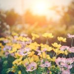 Create an Amazing Spring Garden