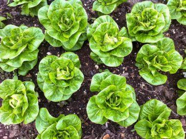Fold Farm for website-1