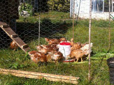 Fold Farm for website-40