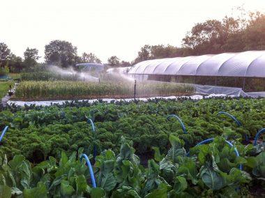 Fold Farm for website-8