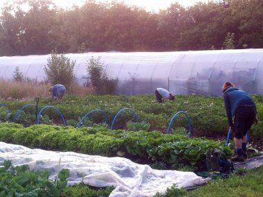 Fold Farm for website-9