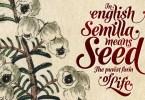 Semilla [1 Font] | The Fonts Master