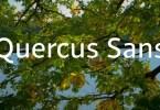 Quercus Sans Super Famıly [16 Fonts] | The Fonts Master
