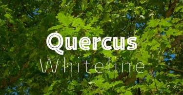 Quercus Whiteline Super Family[3 Fonts]   The Fonts Master