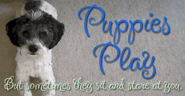 Puppies Play [1 Font]