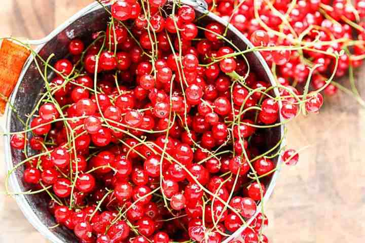 Red currant, just harvested