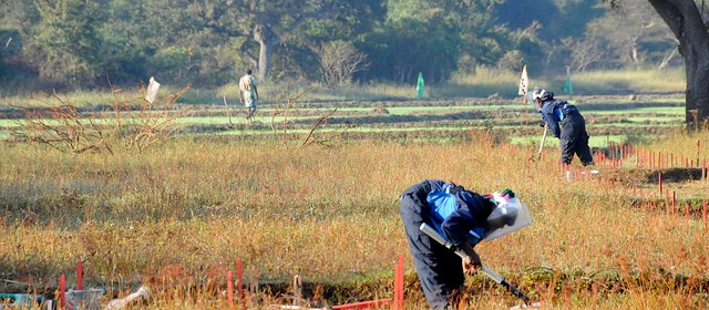 De-mining technicians from the UK charity HALO Trust at work early in the morning, on the edges of a paddy field near Thunukkai, northern Sri Lanka. [© Russell Watkins / DFID]