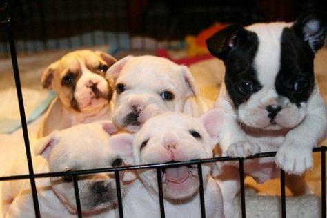 puppies-prison