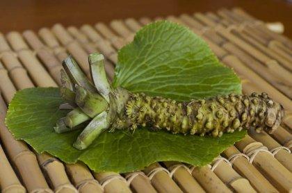 Wasabi-yummy0ugly-min
