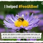 Free Wildflower Seed Packet – Help provide food for pollinators