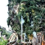 Tips for Pandora – The World of Avatar at Disney's Animal Kingdom!