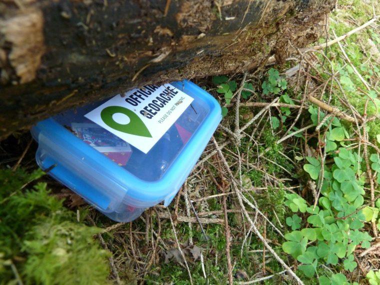 official geocache box hiding under a log