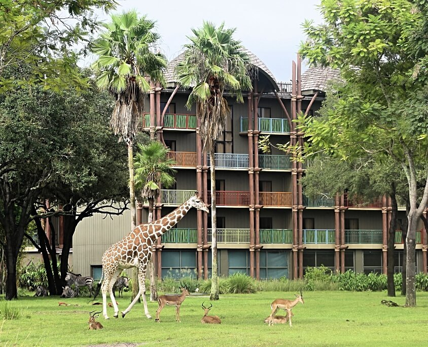 giraffe and antelope at disney's animal kingdom lodge
