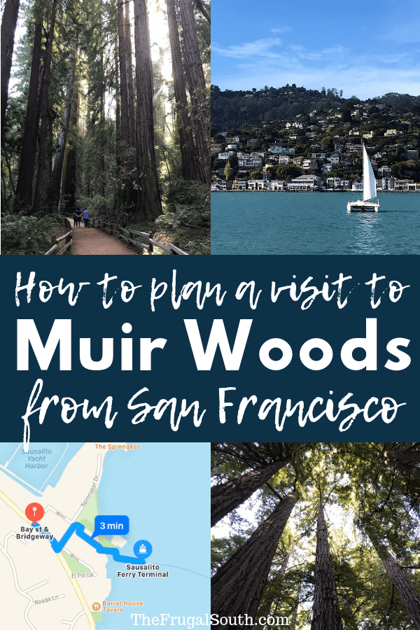 How To Plan A DIY Muir Woods Tour From San Francisco