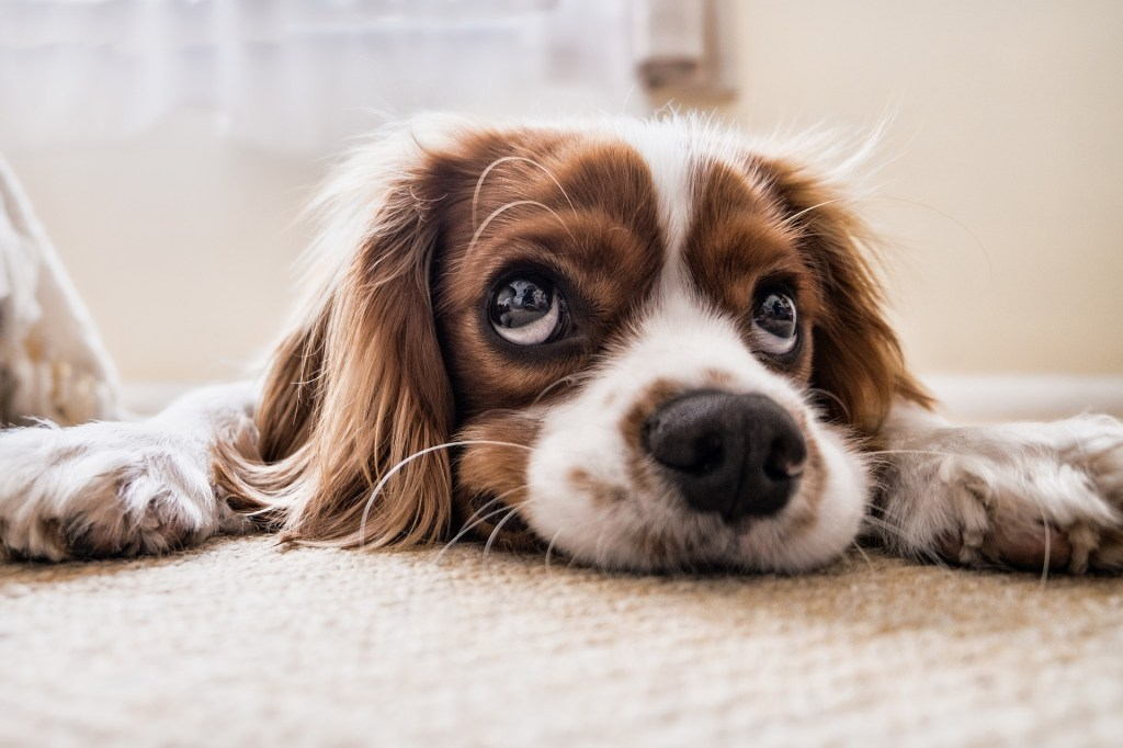 Check out how you can earn extra cash by starting a side hustle in dog sitting. Read these must see FAQ about Rover and how to get paid to love dogs!