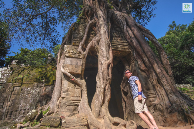The strangler fig tree at Ta Som.